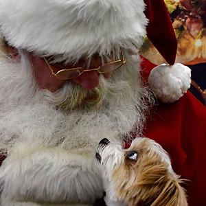 Santa Photos at Karen's Canine Kitchen