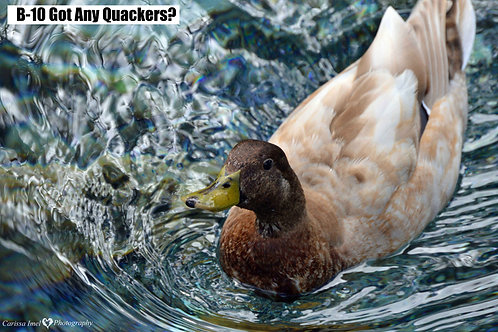 Got any Quackers?