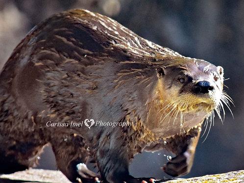 Otter my Way!