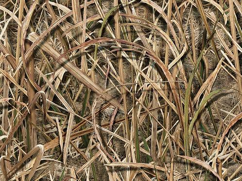 Saw Grass Camo Vinyl