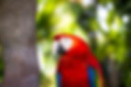 animal-4084263_1920.jpg