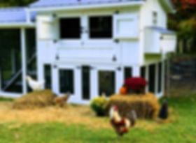 Stowe VT Organic Farm | Stowe Meadows