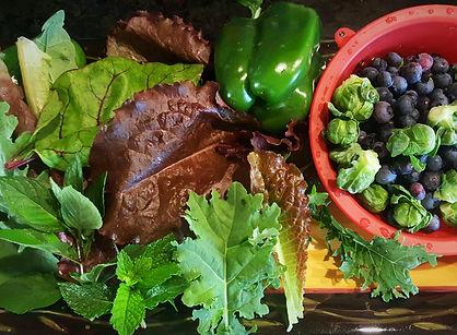 Organic Garden | Stowe Meadows