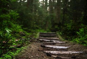 Stowe VT Hiking | Stowe Meadows