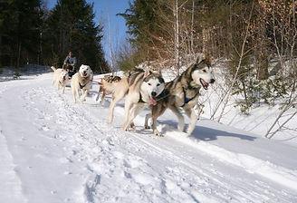 Dog Sledding | Stowe Meadows