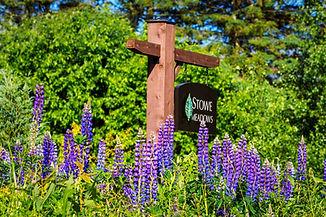 Stowe Vermont Spring Flowers