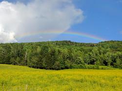 Summer - Field - Cows - Rainbow