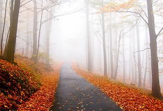 Stowe Rec Path | Stowe Meadows