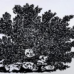 Algues 39