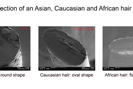Ethnicity and hair structure
