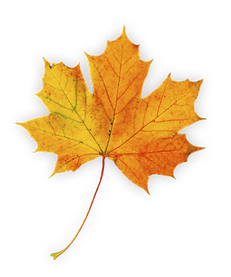 leaf 2 (shadow).png