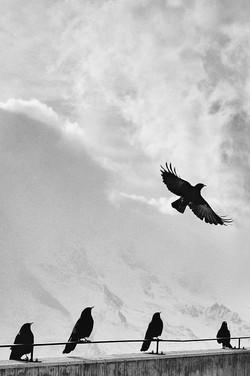 birds-984346_960_720