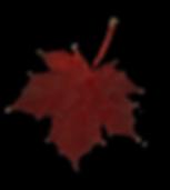 leaf 1 (shadow).png