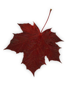 leaf 1 (shadow).png