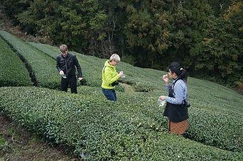 Uji Matcha Tea Farm Experience