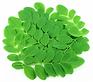 moringa_leaves_2048x.webp