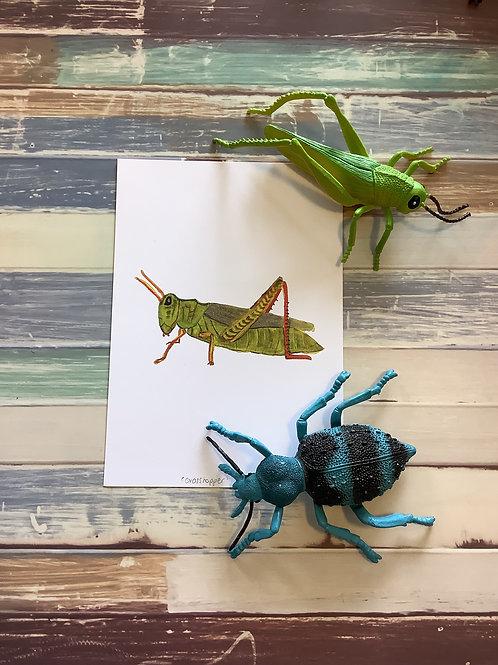 Grasshopper A5 Heavy Weight Art Print