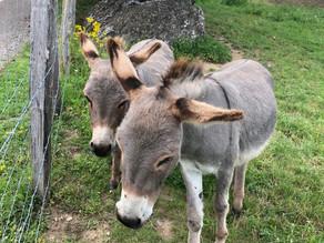 I married into a family of baby donkeys
