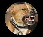 Animal Bite Law