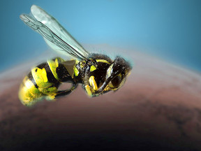 ENTREPRENEURSHIP: MY JOURNEY FROM SAVING THE BEES, TO GOING TO MARS