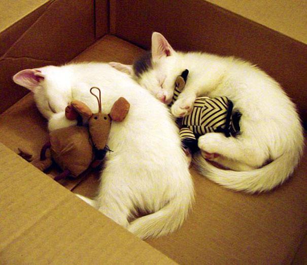cute-animals-sleeping-stuffed-toys-32