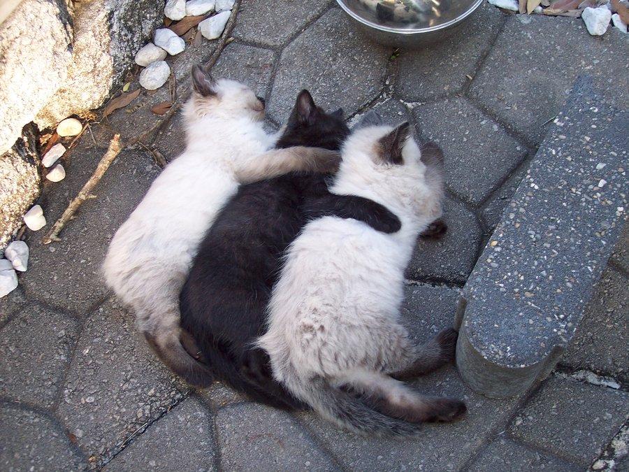gatti abbracci