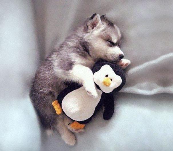 cute-animals-sleeping-stuffed-toys-37