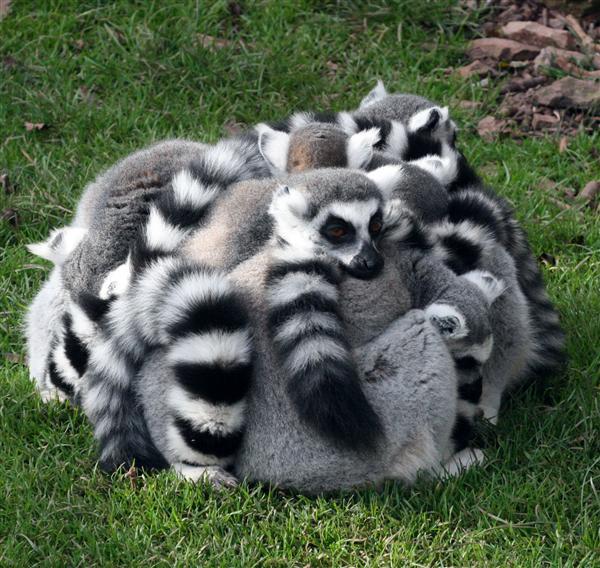 group hug 2
