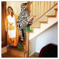 zebra on stairs.jpg