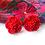Thumbnail: Topos Flor
