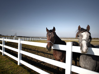 iStock_horse.jpg
