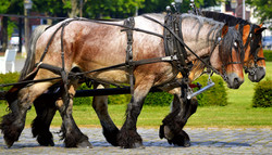 work-horses-2383623_1920.jpg