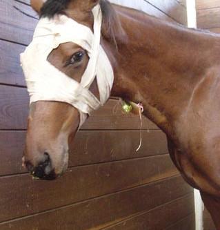 Equine Medical Emergencies!