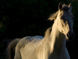 horse-2030974_1920.jpg