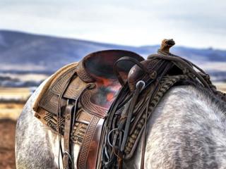 animal-field-horse-53136.jpg