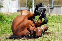 Equine Therapeutic Services