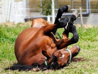 horse-107849_1920.jpg
