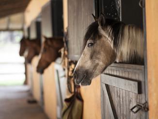 horse-2649609_1920.jpg