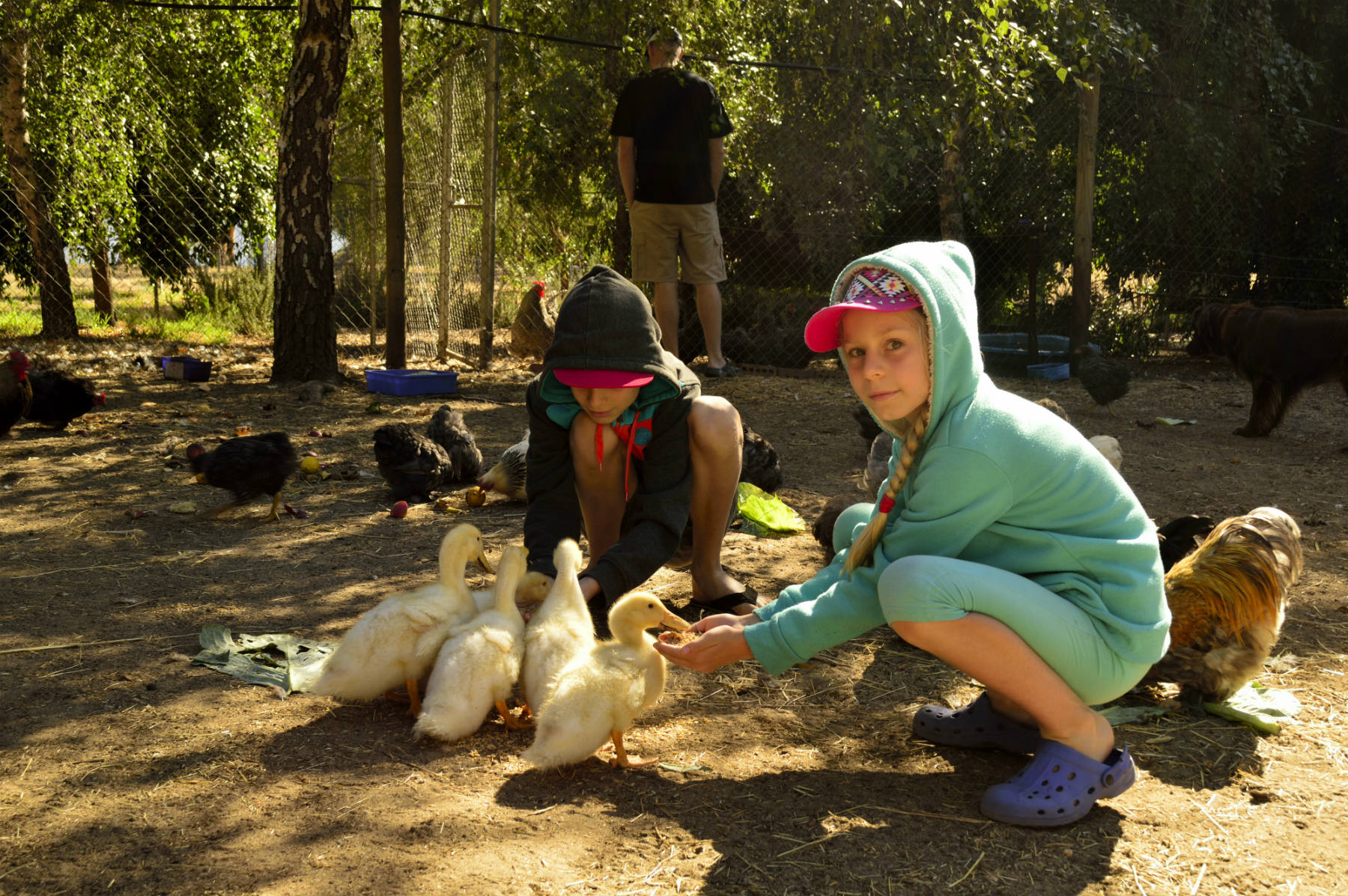 Daily animal feeding-
