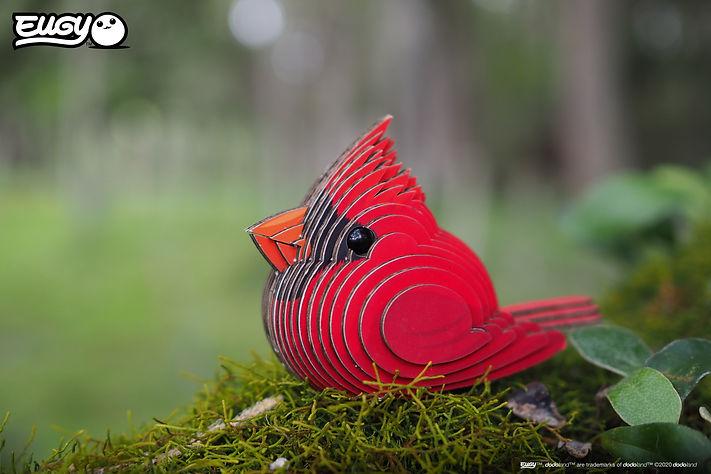 068_cardinal_01.JPG