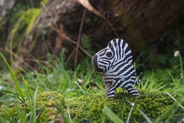 zebra_a04.jpg