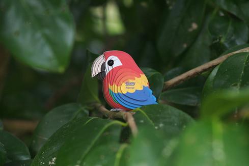 parrot05.JPG