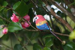 parrot09.jpg