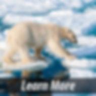 polarbear_but.JPG