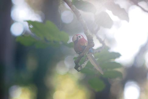 parrot01.JPG