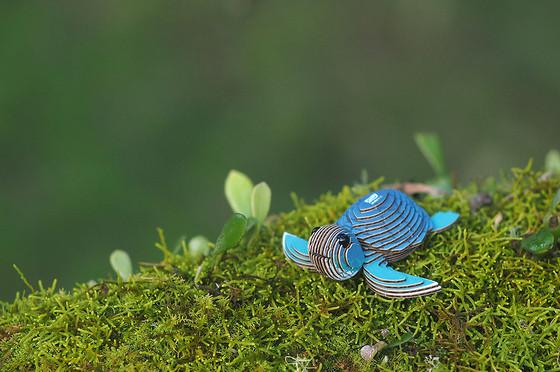 turtle_04.JPG
