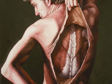 Anatomical illustrator