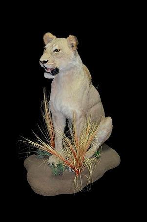 LION SIT STR UP.JPG