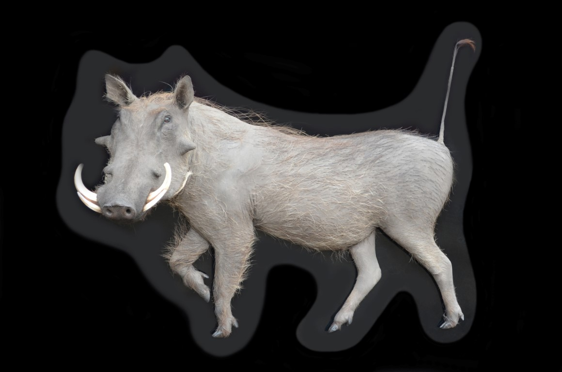 WARTHOG ART DECOR