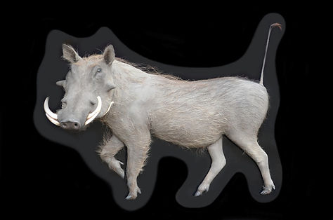 WARTHOG ART DECOR.jpg